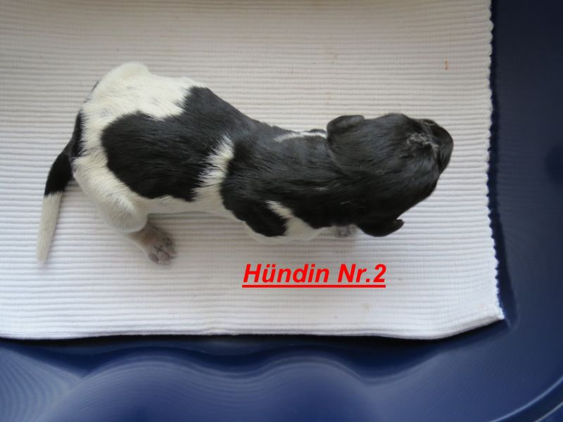 f-hndin-2